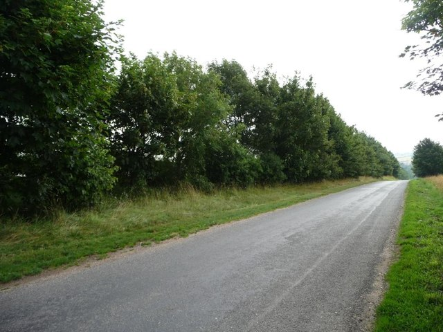 Tall Hedge Along The Road To Fulletby C Christine