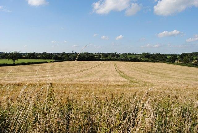 Barley Battle Field