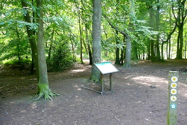 In Pullingshill Wood