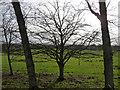 TQ2117 : Tree near Henfield by Stephen Richards