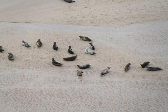 Seals on a sandbank