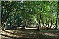 TL2904 : Little Home Wood : Week 37