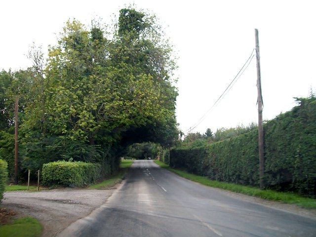 Arching tree over the R164 at Oakley Park, south of Moynalty