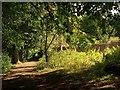 ST6376 : Path, Oldbury Court Estate by Derek Harper