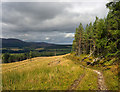 NH6171 : Forestry road on the flank of Cnoc Duchaire : Week 38