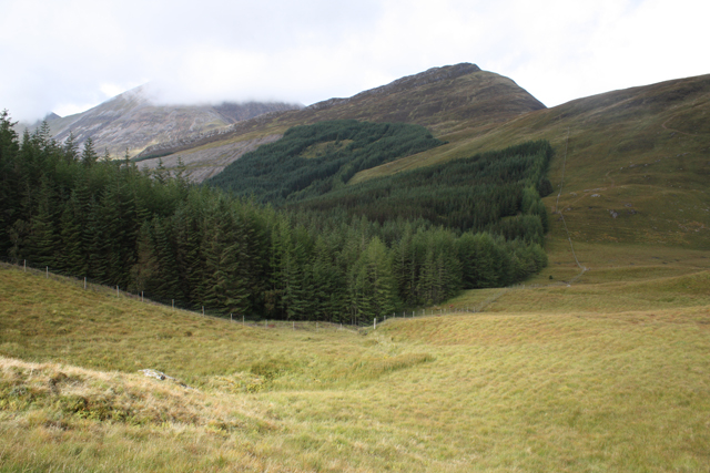 Plantation south of Sgorr a'Choise