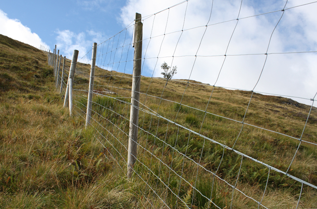 Deer fence NW of Meall Ligiche