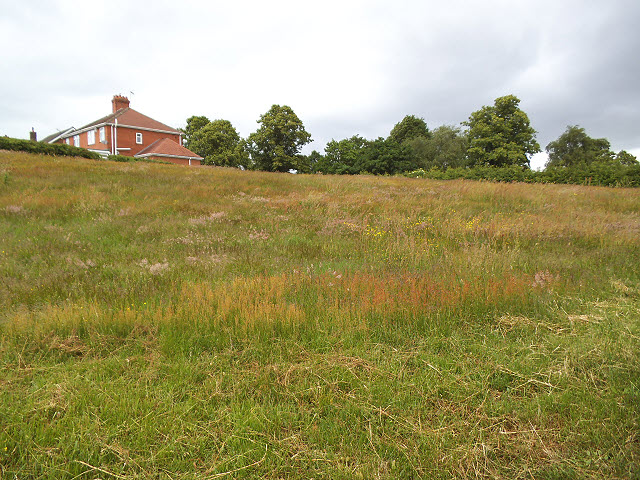 Meadow north of Dingle Lane