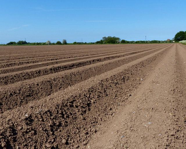 Neatly ploughed field near Pierrepont Farm