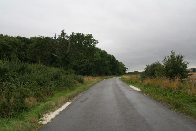 Withern Wood