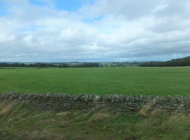 Pastureland northwest of Bolam West Houses