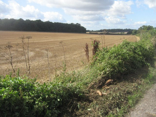 Fields south of Trenchard Lane