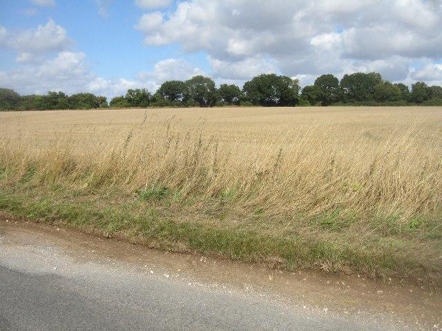 Farmland north of Trenchard Lane