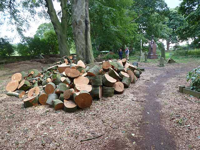 Felled tree in Adel churchyard