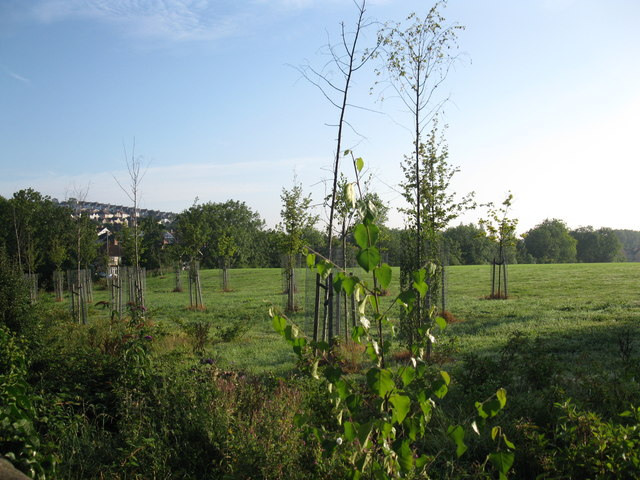 Young trees in the grounds of South Bristol Sports Centre