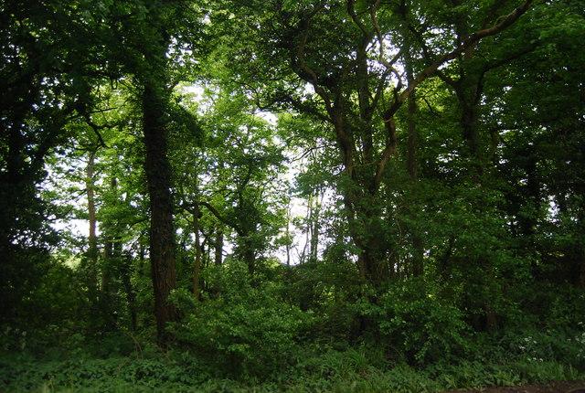 Roadside woodland