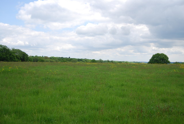 Meadow by Bourne Lane