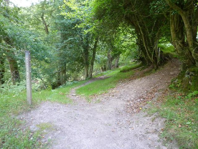 Bridleway to Wilmersham