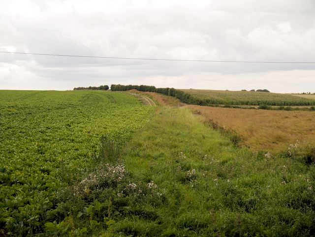 Farmland to the East of Bellmount Plantation