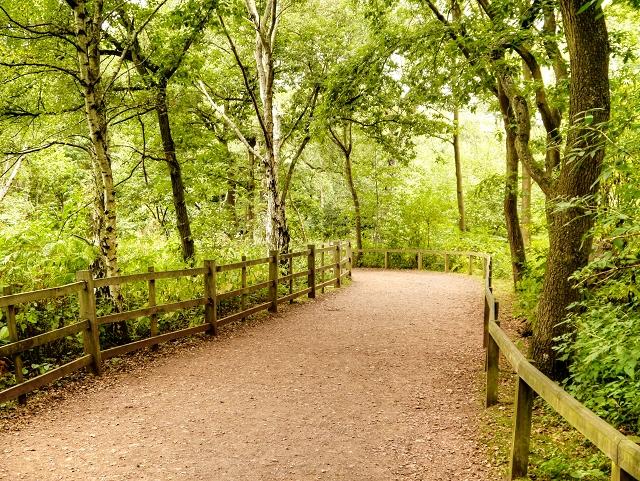 The Major Oak Path, Sherwood Forest