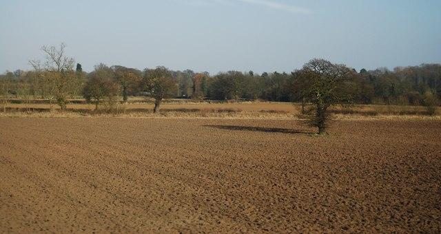 Tree in a field near Bradley Green