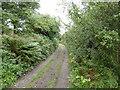 SW4936 : Lane near Tregarth by David Medcalf