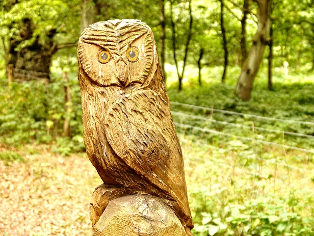 Owl Waymarker, Sherwood Forest