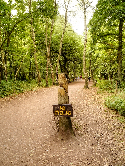 Path in Sherwood Forest