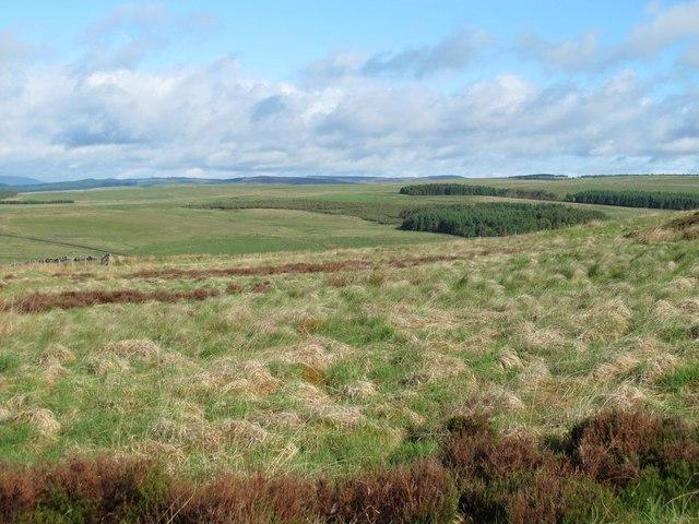 Moorland and plantations around Durtrees Burn