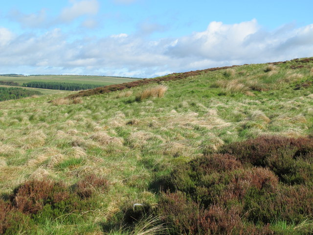 Moorland above and east of Durtrees Burn