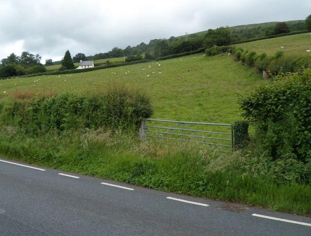 Sheep in a field near Tretower