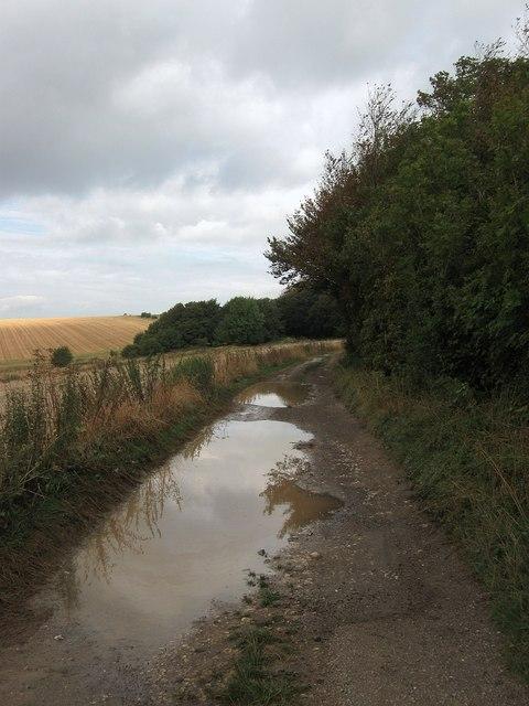 Track, Highden Beeches