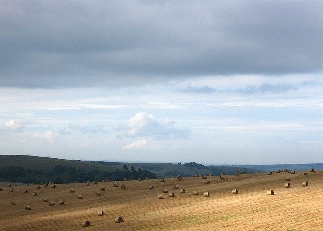 Bales near Cobden Farm