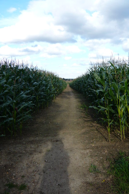 Corn on the Cob way