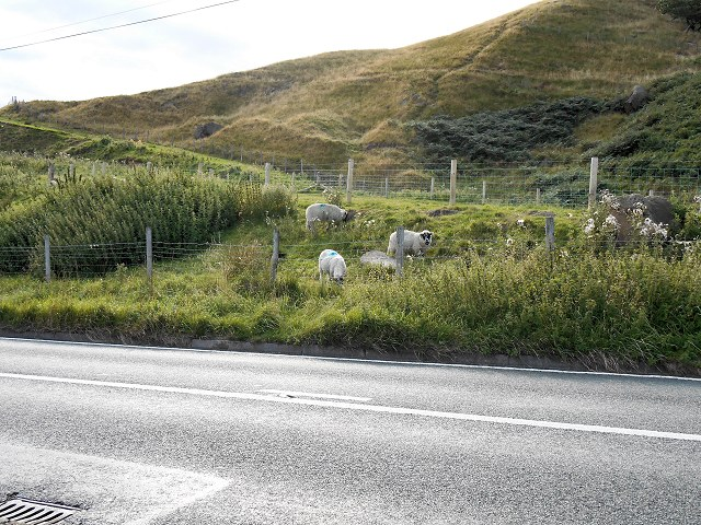 Sheep at the Side of Holmfirth Road