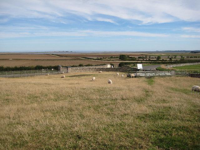 Sheep grazing at The Barn at Beal