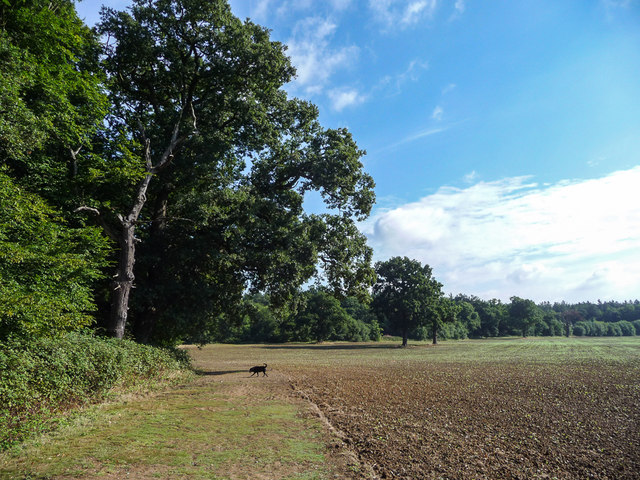 Farmland in Trent Park, London N14
