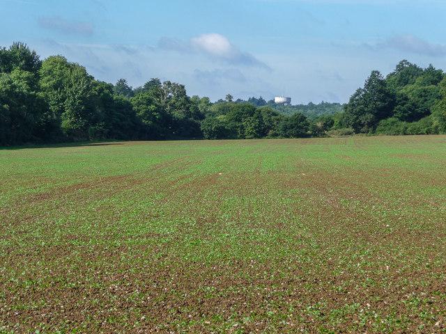 Farmland in Trent Park, London N14