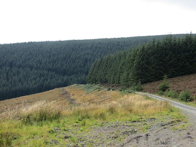 Logging road, Minchmoor