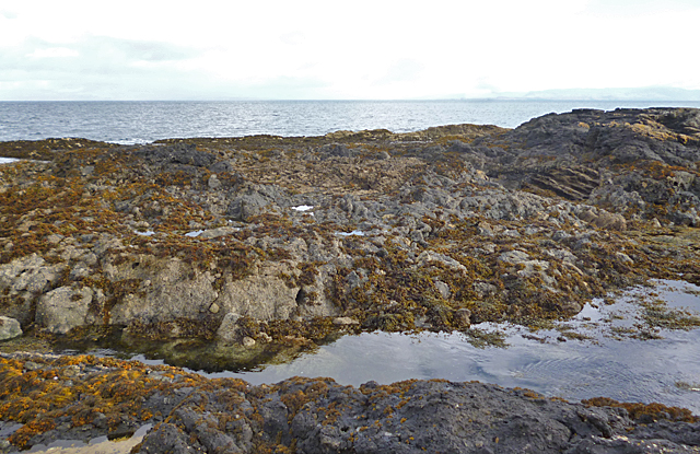 Intertidal Rocks