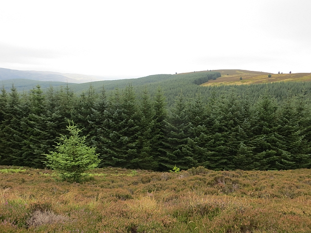 Forestry, Minch Moor