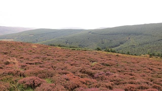 Moorland by the Minchmoor Road