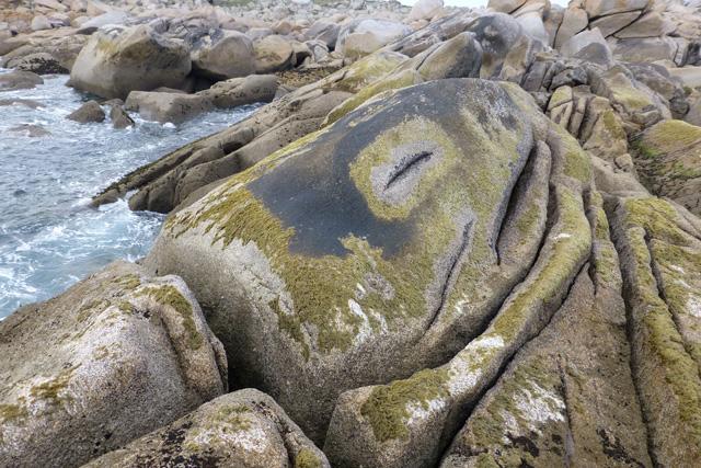 A sleeping seal