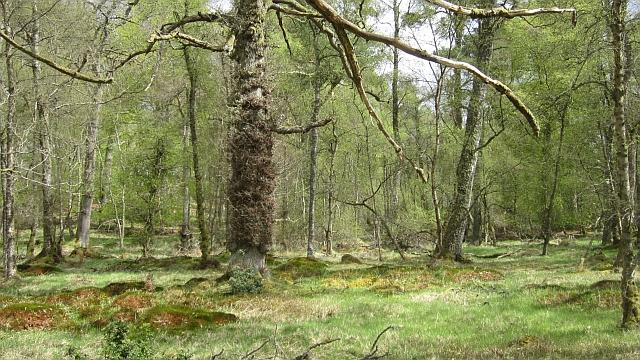 Blairbell Wood