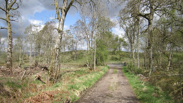 Track out of Blairbell Wood