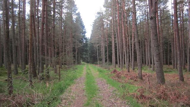 Charlesfield Wood