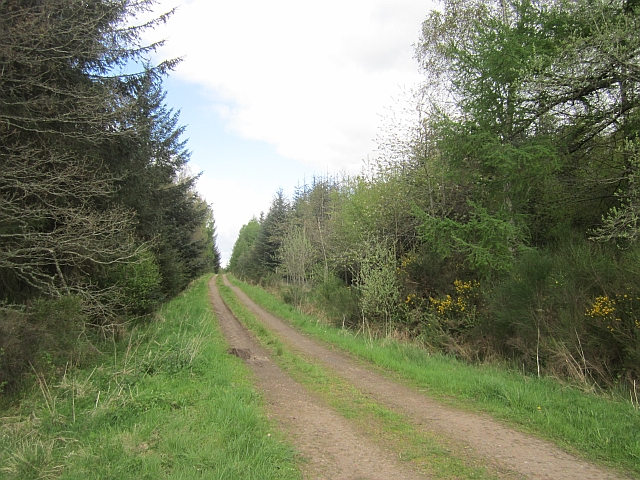 Forest road, Gask