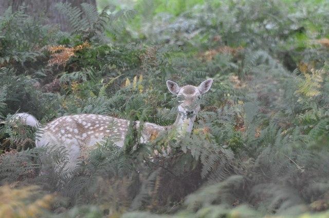 Teignbridge : Ferns & Deer