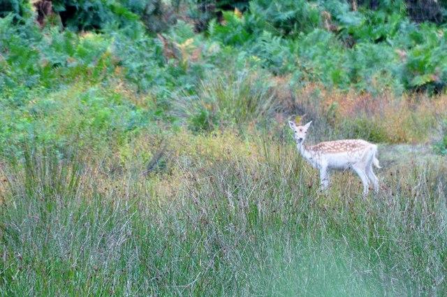 Teignbridge : Deer Park