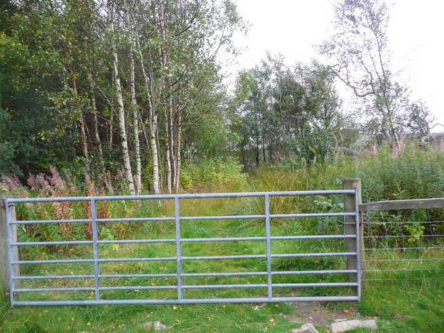 Gate at the end of the woods
